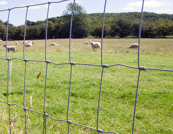 New type field fence used for deer with fixed knot